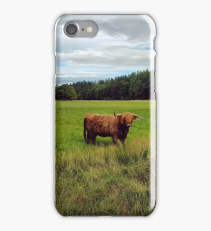 Scottish Highland Cattle iPhone Case/Skin