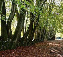 Woodland Walk by John Thurgood