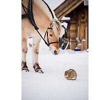 Hest og kanin Photographic Print