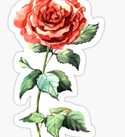 Watercolor rose Sticker