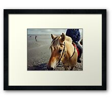 Norwegian Fjord Horse Beach Ride Germany Framed Print