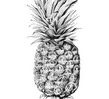 Pinapple illustration by beakraus