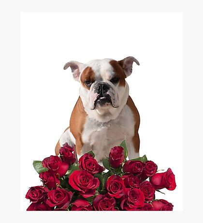 Boxer Dog with Red Roses Photographic Print