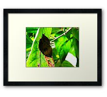 Clever Disguise Framed Print