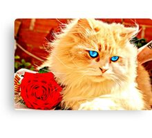 Kitten Rose Canvas Print