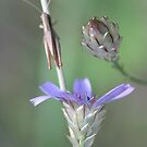 Provence trio by yvesrossetti