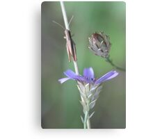 Provence trio Canvas Print