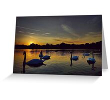Sunset Swans Hyde Park Greeting Card