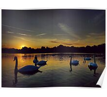 Sunset Swans Hyde Park Poster