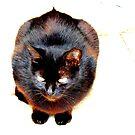 The Black Cat by Barnbk02