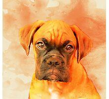Boxer Puppy Photographic Print