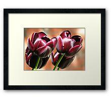 Singing of Spring - Quartet of Tulips Framed Print