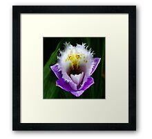 Phyllis-as-in-Diller  -  Orchid Alien Discovery Framed Print