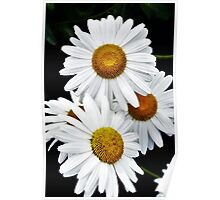 Daisies Abstract Poster