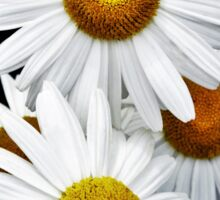 Daisies Abstract Sticker