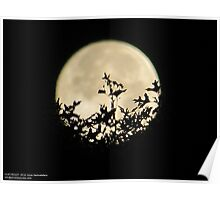 Tree In The Moon Shadow Poster