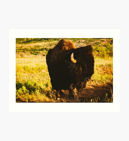 Mr. Buffalo Art Print