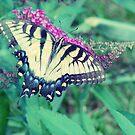 Butterfly by angelandspot