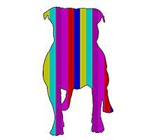 Bull Terrier Range Photographic Print