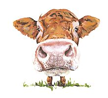 Cute Cow Photographic Print