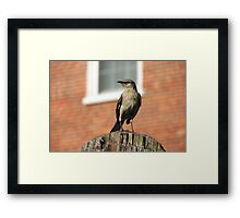 Mockingbird on a Post Framed Print