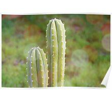 Cactus Plants Poster