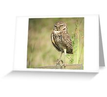 The Ladies Owl Greeting Card