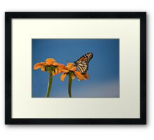 Look Up to the Sky Framed Print