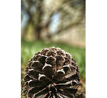 Close Up of a Pine Cone Photographic Print