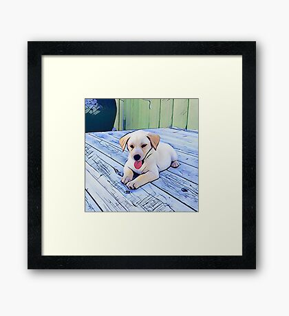 Yellow Lab Puppy Framed Print