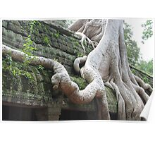 Roots Gone Wild, Ta Prohm, Angkor, Cambodia Poster