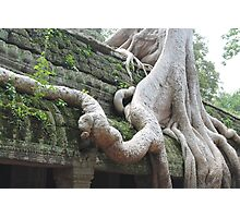 Roots Gone Wild, Ta Prohm, Angkor, Cambodia Photographic Print