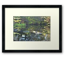 Garden water pond eco-system Framed Print