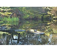Garden water pond eco-system Photographic Print