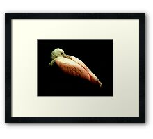 Avian Profile ~ Part Three Framed Print