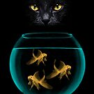 Black Cat Goldfish by Vin  Zzep