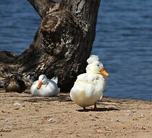Three Feathered Friends  by Heather Friedman
