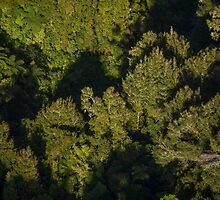 Trees from Above.  New Zealand, lower North Island by Mark Hill