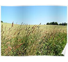 Grasses on the Field III Poster