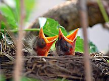 MOM!!!!!!!!!!! We're Hungry by Grinch/R. Pross