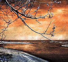 Barrier Beach - Old Woman Creek -Sunset by SRowe Art
