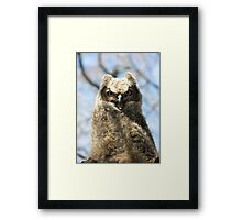 Young Owl Framed Print