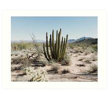 Sonoran Desert Organ Pipe Cactus Art Print