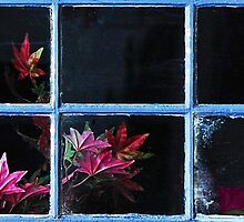 Spider web and Flowers behind the Window by Imi Koetz