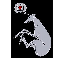 Happy dreaming hound Photographic Print