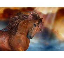 The Bay Stallion Photographic Print