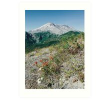 Mount St Helens with Wildflowers Art Print