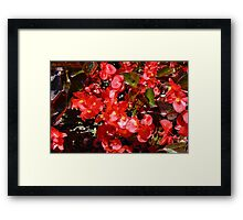 Natural texture with small red flowers Framed Print