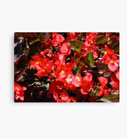 Natural texture with small red flowers Canvas Print