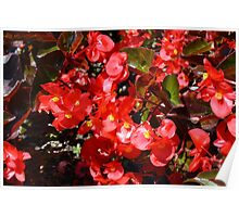 Natural texture with small red flowers Poster